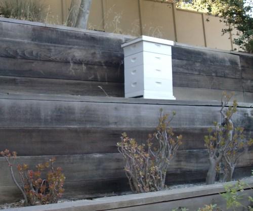 California bees.