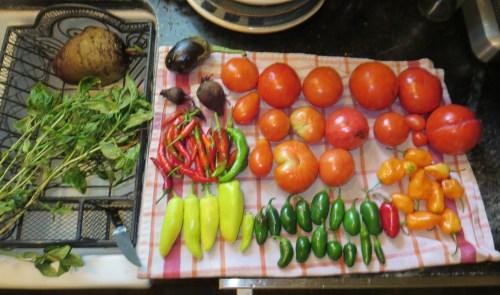 Equinox harvest