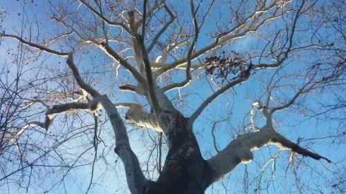 Big ass tree.