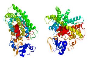 Aromatase_3D_Struktur