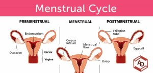 cara pakai obat cytotec gastrul aturan penggunaan obat aborsi