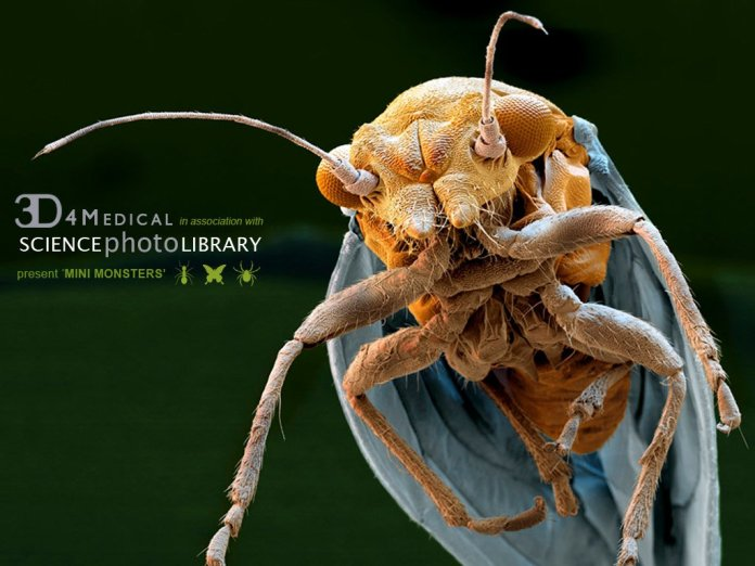 Mini-Monsters Offers A Stunning, Detailed & Up Close Look At All Things Creepy-Crawly