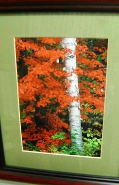 102 - DD - framed photo