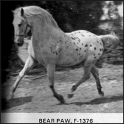 Bear Paw F-1376