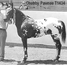 ChubbyPawnee3