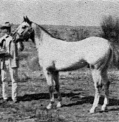 zaaeljrf2066