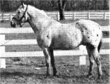 cheetahf125