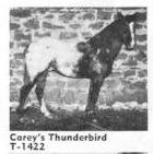 careysthunderbird1422