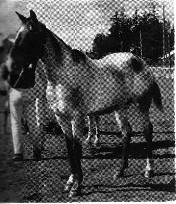 ivycrestlucky1909a
