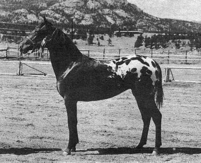 karetha1853