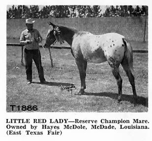 littleredladyt1886