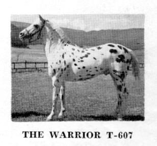 thewarriort607f