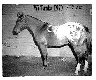witankat970d