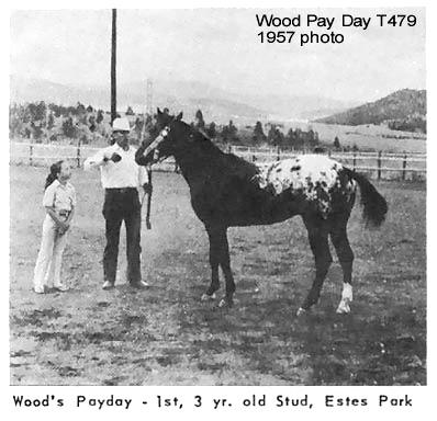 woodpaydayt479