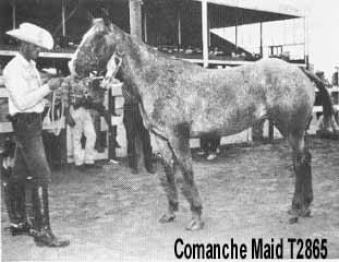 comanchemaidt2865a