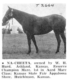 nacheetat2664