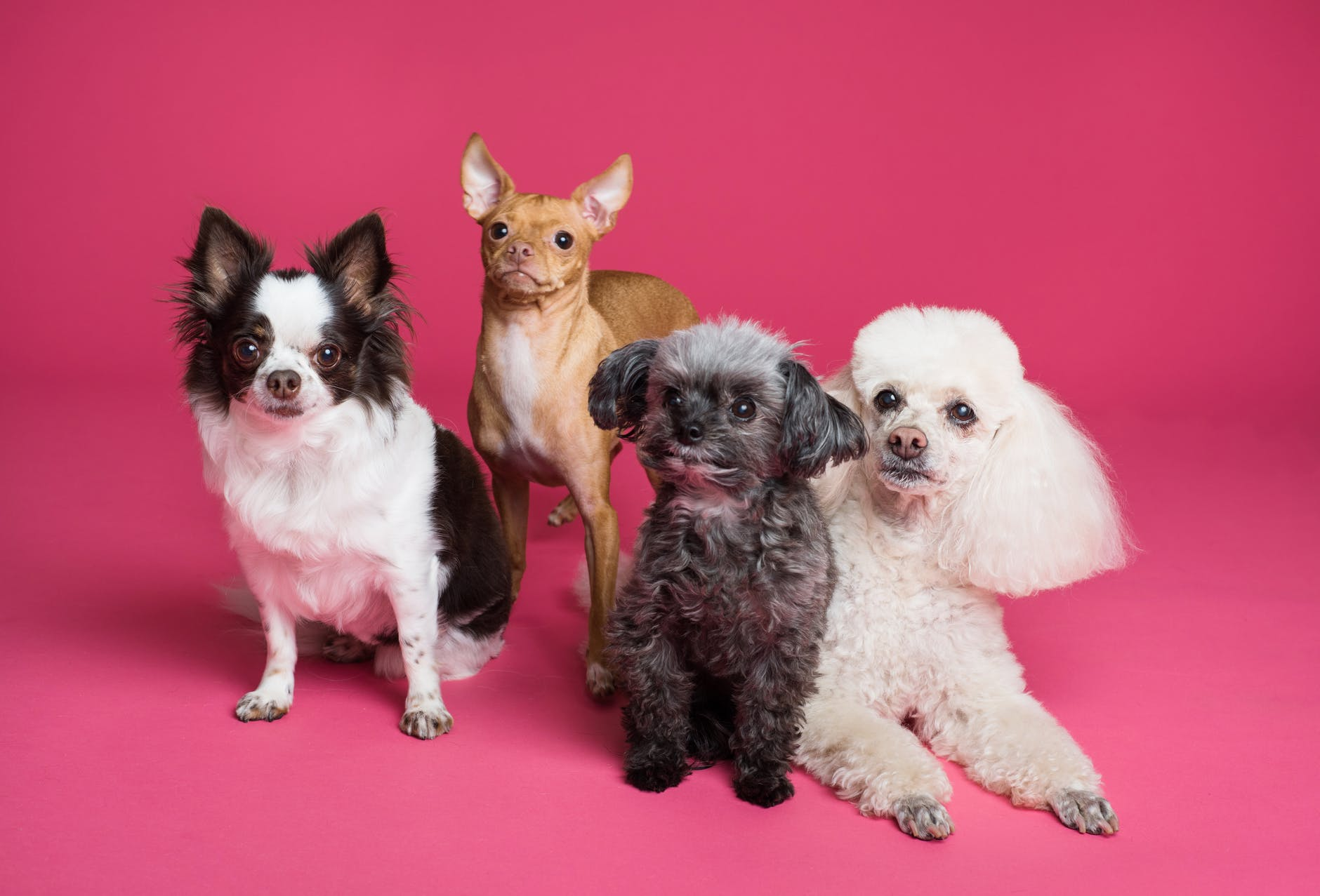 photo of different puppies