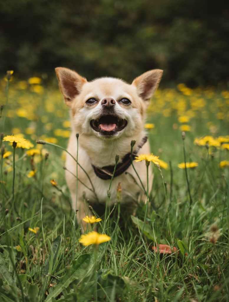 cute puppy running on flower ground