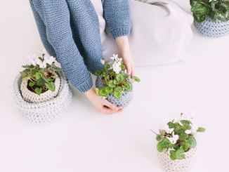 person in blue sweater holding green potted plant