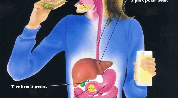 Digestive System Diseases and Disorders: Signs, Symptoms and