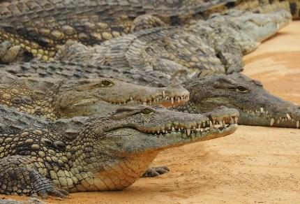 ferme crocodiles drome