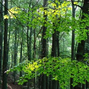 """Parco nazionale della Majella: interviene il Ministero dell'Ambiente e l'Ente Parco accerta """"danni permanenti"""""""