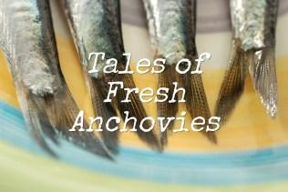 Tales of Fresh Anchovies | Photo ©OrsolaCirielloKogan