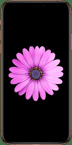 Iphone live wallpaper maker app