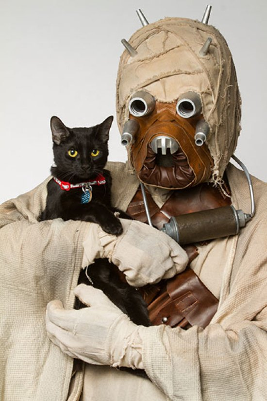 star-wars-animales-2