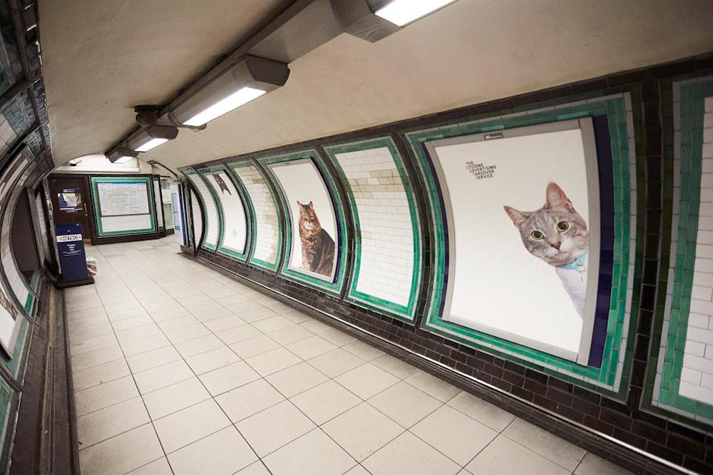 gatos metro londres
