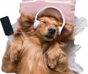 Happy dog listening music