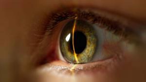التعرف على بصمة قزحية العين