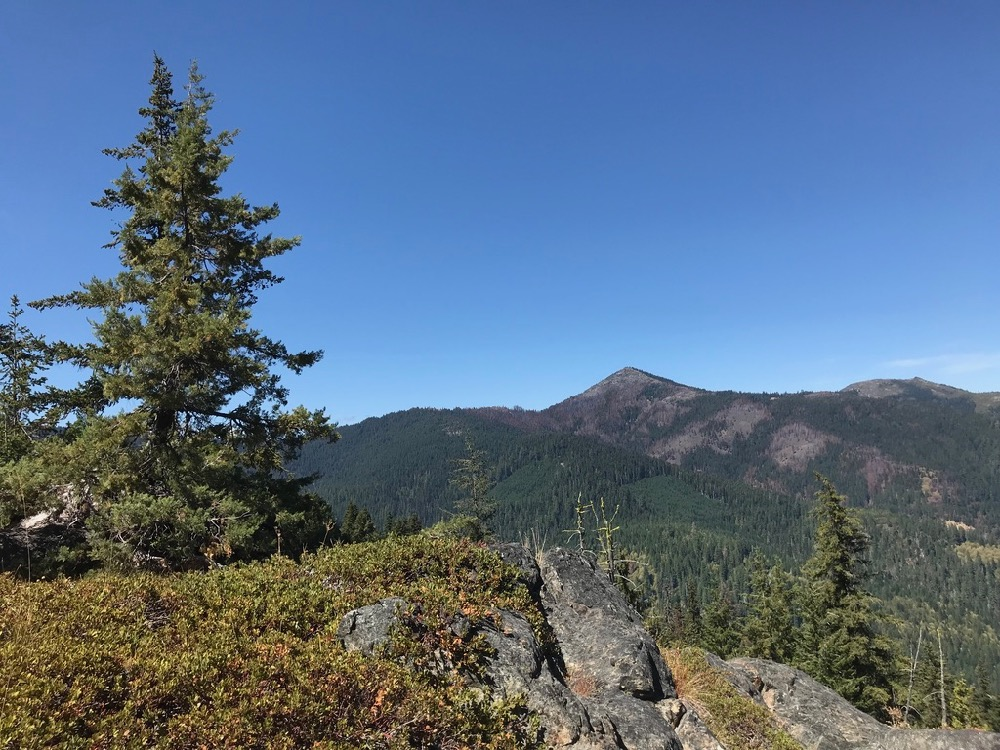 Mysterious Baker Cypress: A Fire Dependent Endemic of Southwestern Oregon and Northern California
