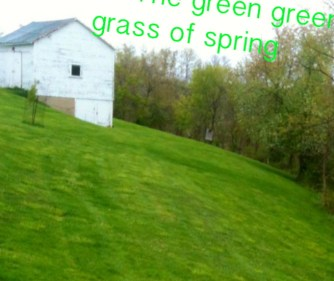 the green green grass of spring