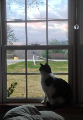 10. Cat in window misty color