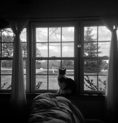 9. Cat in window