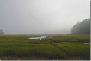 cod harbor marsh