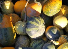 Need pumpkins or outdoor fun this fall? Check out the Wright Family Farm