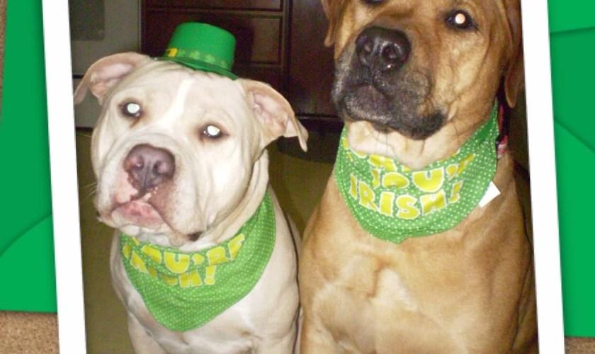 Irish Dogs and Rover.com