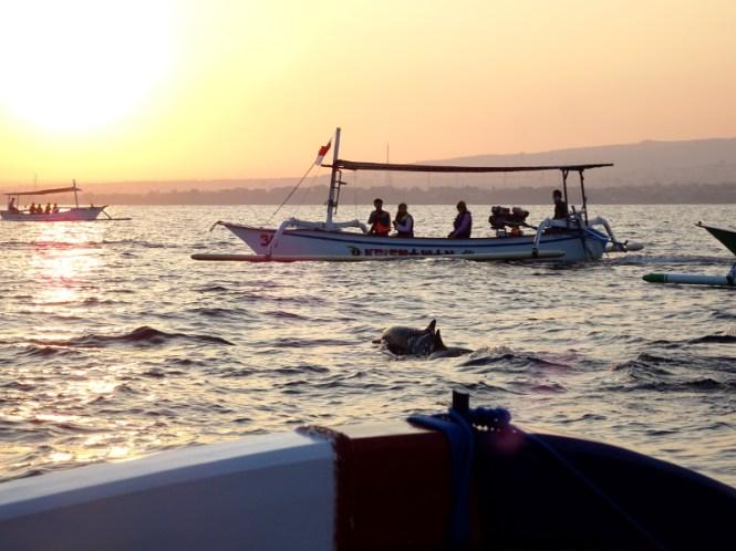bali norden lovina beach dolphin watching