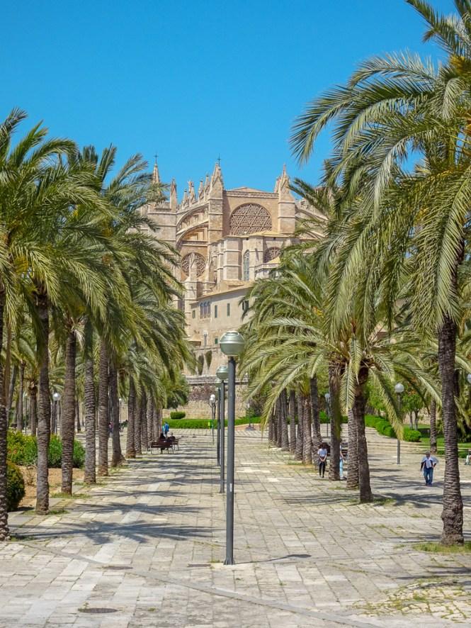 palma de mallorca - kathedrale mit palmen