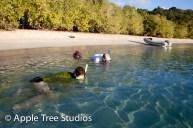 Apple Tree Studios Sail Mag12