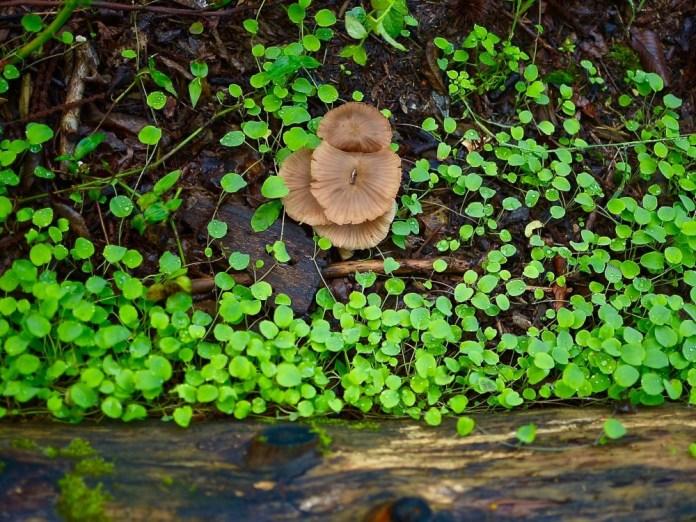 Nagano Mushroom