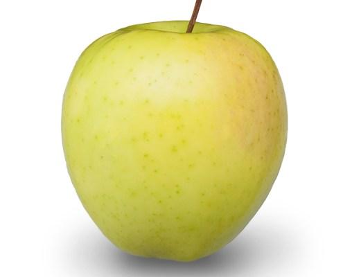 Gingergold Apples