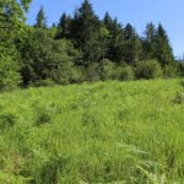 A small meadow, dominated by introduced grasses such as false brome, but includes Kincaid's lupine and nectar-producing native plants