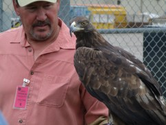 Joe Atkinson of CorJo Wildlife Productions talks about the susceptibility of raptors to lead poisoning.