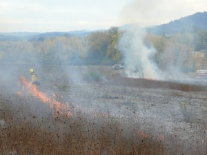 Lupine Meadows upland prairie in the process of being burned to improve habitat for butterflies.