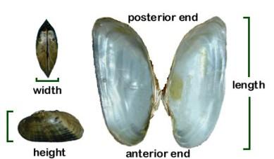 alvaricosa-full-body-plan-dimensions