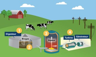 How biogas is created using organic matter such as cow dung