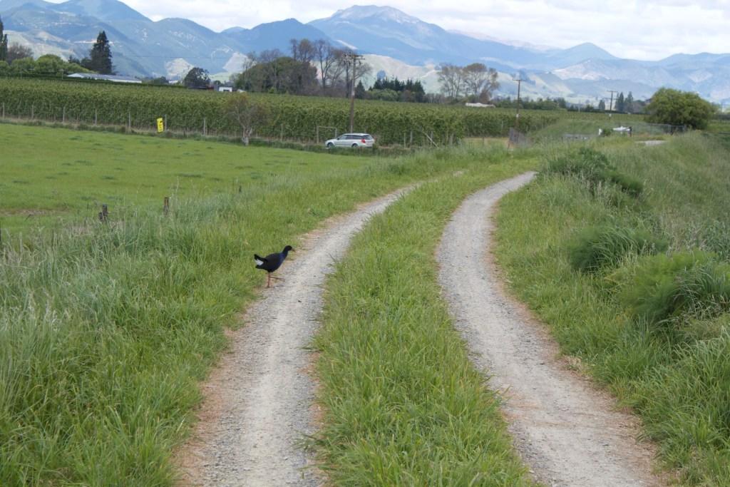 Great Taste Trail vineyards